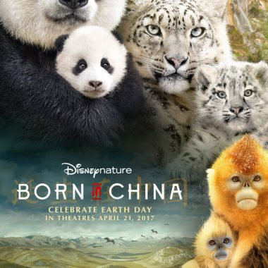 Disneynature's Born In China and Thoughts on Perspective